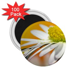 Daisy With Drops 2.25  Button Magnet (100 pack)