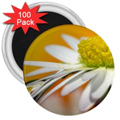 Daisy With Drops 3  Button Magnet (100 pack)
