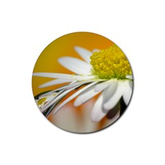 Daisy With Drops Drink Coaster (round)