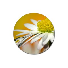 Daisy With Drops Magnet 3  (Round)