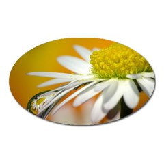 Daisy With Drops Magnet (Oval)