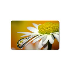 Daisy With Drops Magnet (name Card)
