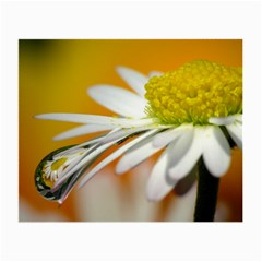 Daisy With Drops Glasses Cloth (Small)
