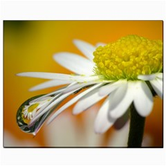 Daisy With Drops Canvas 8  X 10  (unframed)