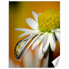 Daisy With Drops Canvas 12  X 16  (unframed)