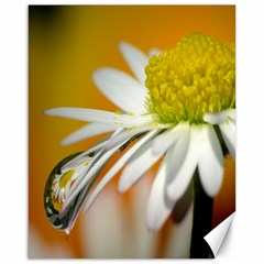 Daisy With Drops Canvas 16  X 20  (unframed)