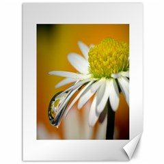 Daisy With Drops Canvas 36  x 48  (Unframed)