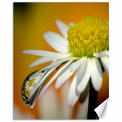 Daisy With Drops Canvas 11  X 14  (unframed)