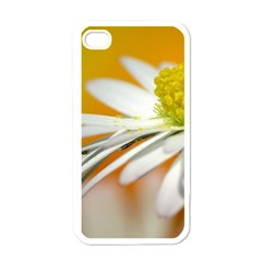 Daisy With Drops Apple iPhone 4 Case (White)