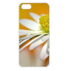 Daisy With Drops Apple iPhone 5 Seamless Case (White)