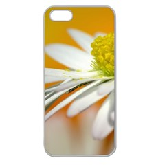 Daisy With Drops Apple Seamless iPhone 5 Case (Clear)