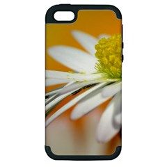 Daisy With Drops Apple iPhone 5 Hardshell Case (PC+Silicone)