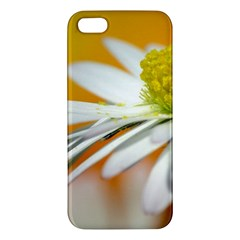 Daisy With Drops iPhone 5 Premium Hardshell Case