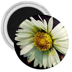 Daisy 3  Button Magnet
