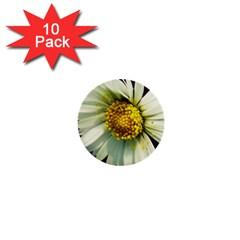 Daisy 1  Mini Button (10 pack)