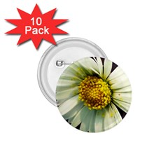 Daisy 1.75  Button (10 pack)