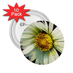 Daisy 2 25  Button (10 Pack)