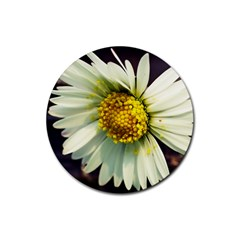 Daisy Drink Coasters 4 Pack (Round)