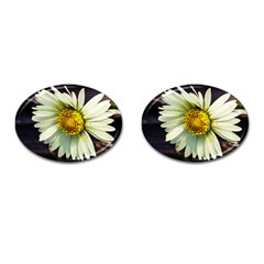 Daisy Cufflinks (Oval)