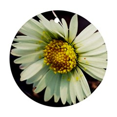 Daisy Round Ornament (Two Sides)