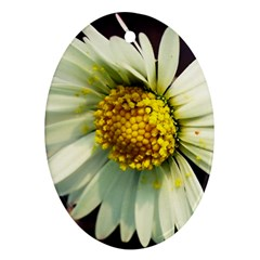 Daisy Oval Ornament (two Sides)