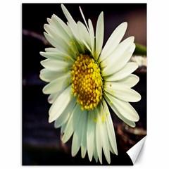 Daisy Canvas 18  x 24  (Unframed)