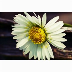 Daisy Canvas 20  x 30  (Unframed)