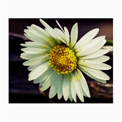 Daisy Glasses Cloth (Small, Two Sided)
