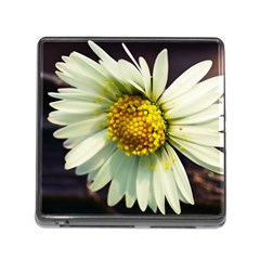 Daisy Memory Card Reader With Storage (square)