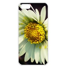 Daisy Apple iPhone 5 Seamless Case (White)