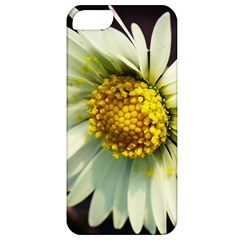 Daisy Apple iPhone 5 Classic Hardshell Case