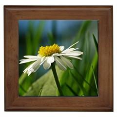 Daisy Framed Ceramic Tile
