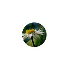 Daisy 1  Mini Button Magnet