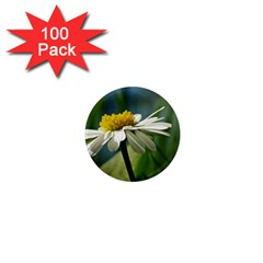 Daisy 1  Mini Button Magnet (100 Pack)