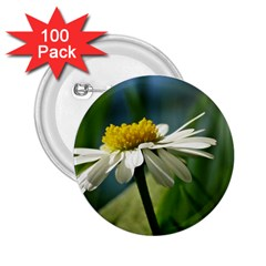 Daisy 2 25  Button (100 Pack)