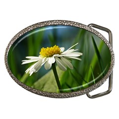 Daisy Belt Buckle (oval)