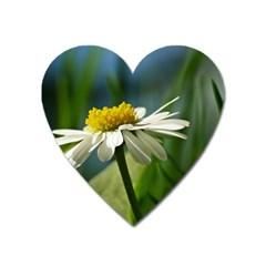 Daisy Magnet (Heart)