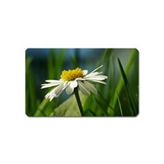 Daisy Magnet (Name Card)