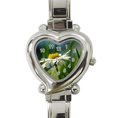 Daisy Heart Italian Charm Watch