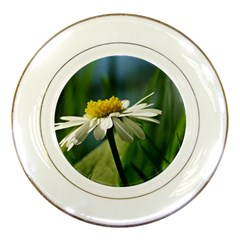 Daisy Porcelain Display Plate