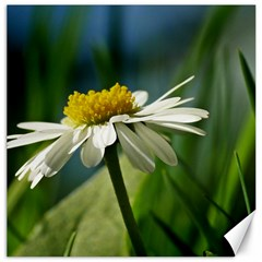 Daisy Canvas 20  X 20  (unframed)