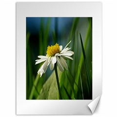 Daisy Canvas 36  x 48  (Unframed)