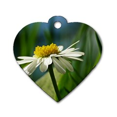 Daisy Dog Tag Heart (one Sided)