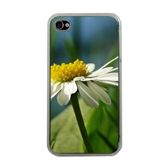Daisy Apple iPhone 4 Case (Clear)