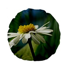Daisy 15  Premium Round Cushion