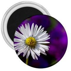 Daisy 3  Button Magnet