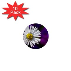 Daisy 1  Mini Button (10 pack)