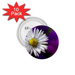 Daisy 1 75  Button (10 Pack)