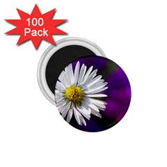 Daisy 1 75  Button Magnet (100 Pack)