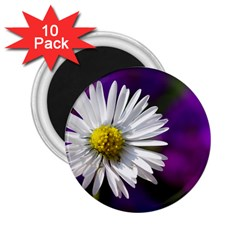Daisy 2 25  Button Magnet (10 Pack)